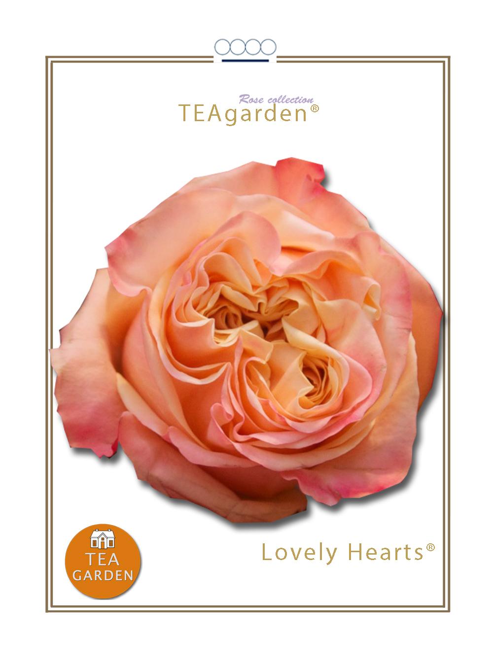 Lovely Hearts®