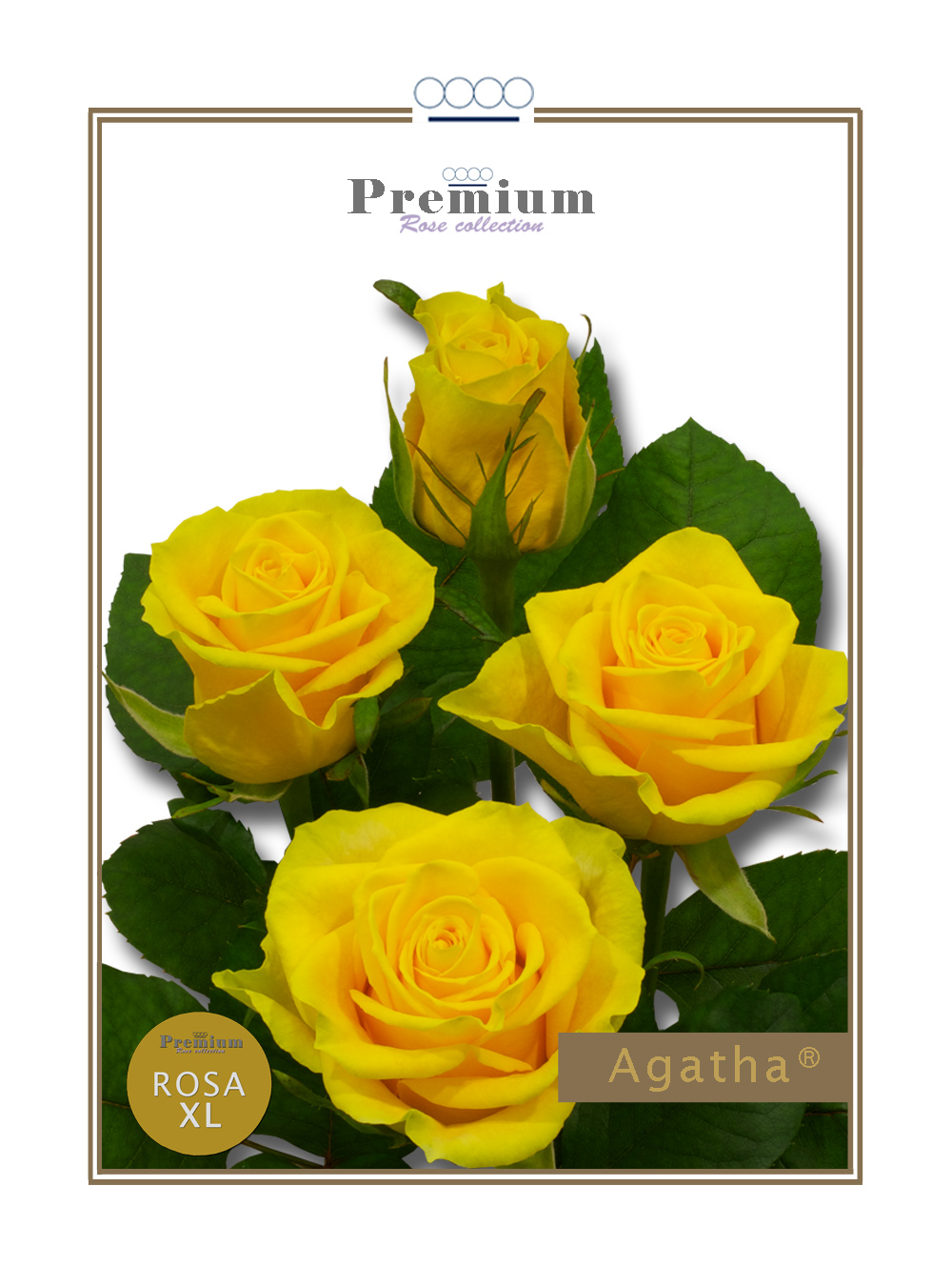 Agatha®