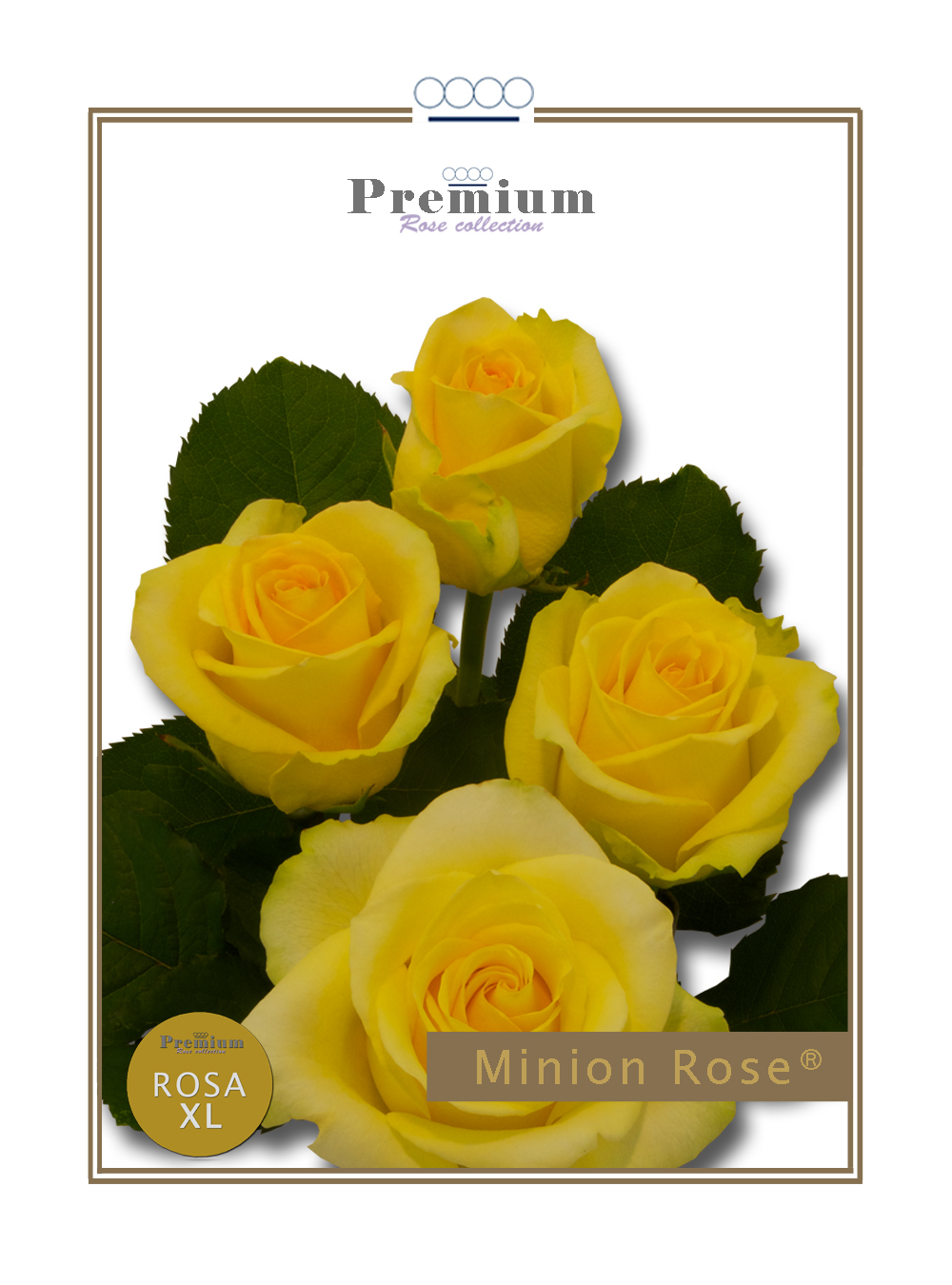 Minion Rose®