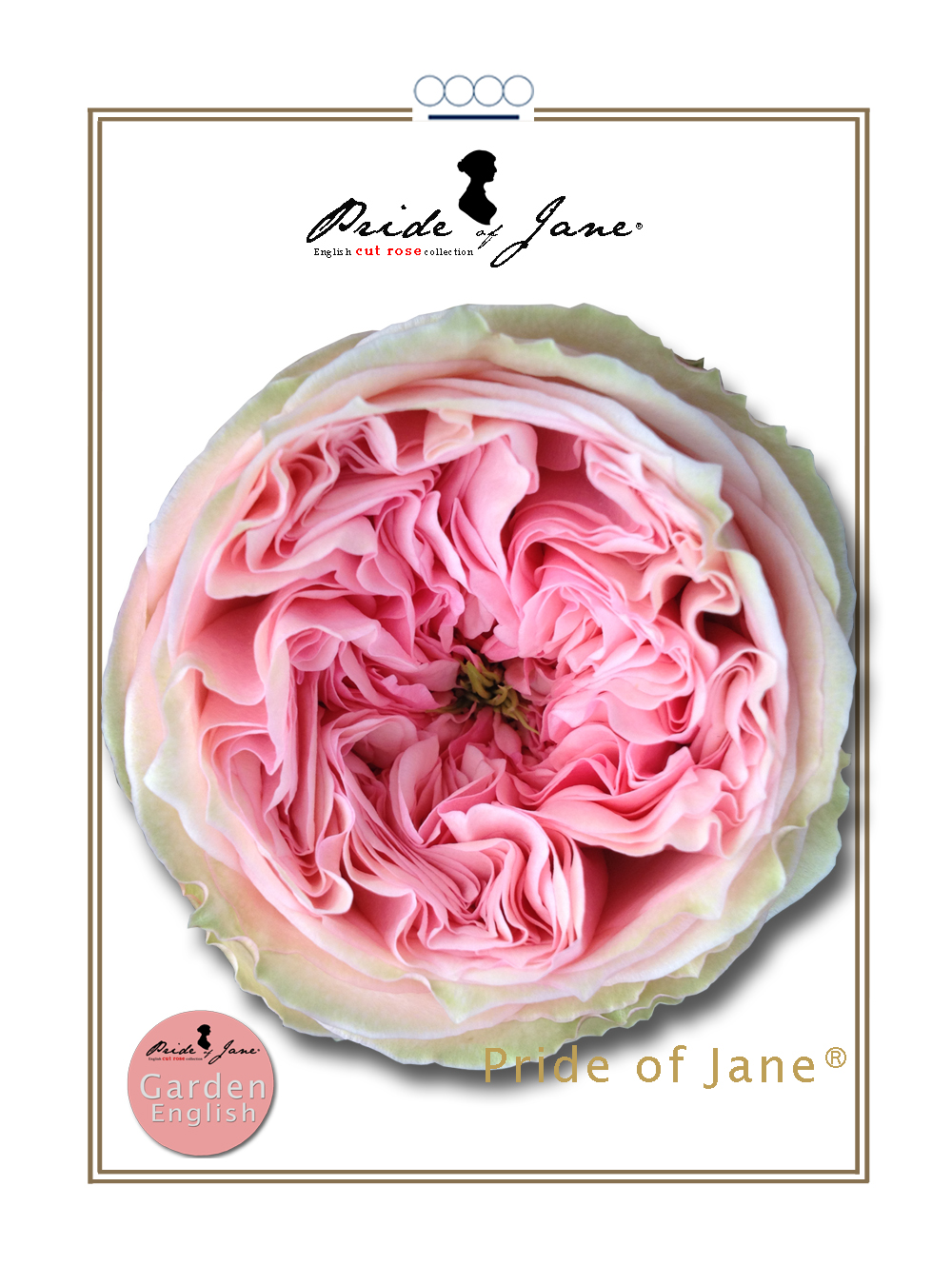 Pride of Jane®