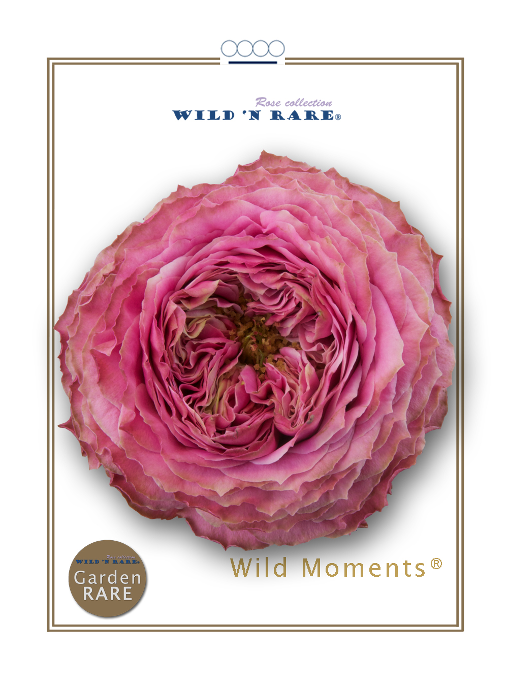 Wild Moments®
