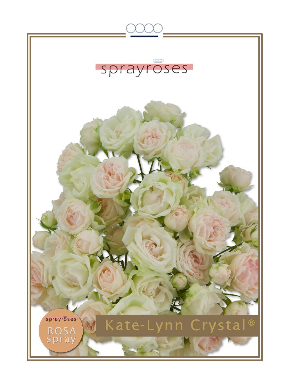 Kate-Lynn Crystal®