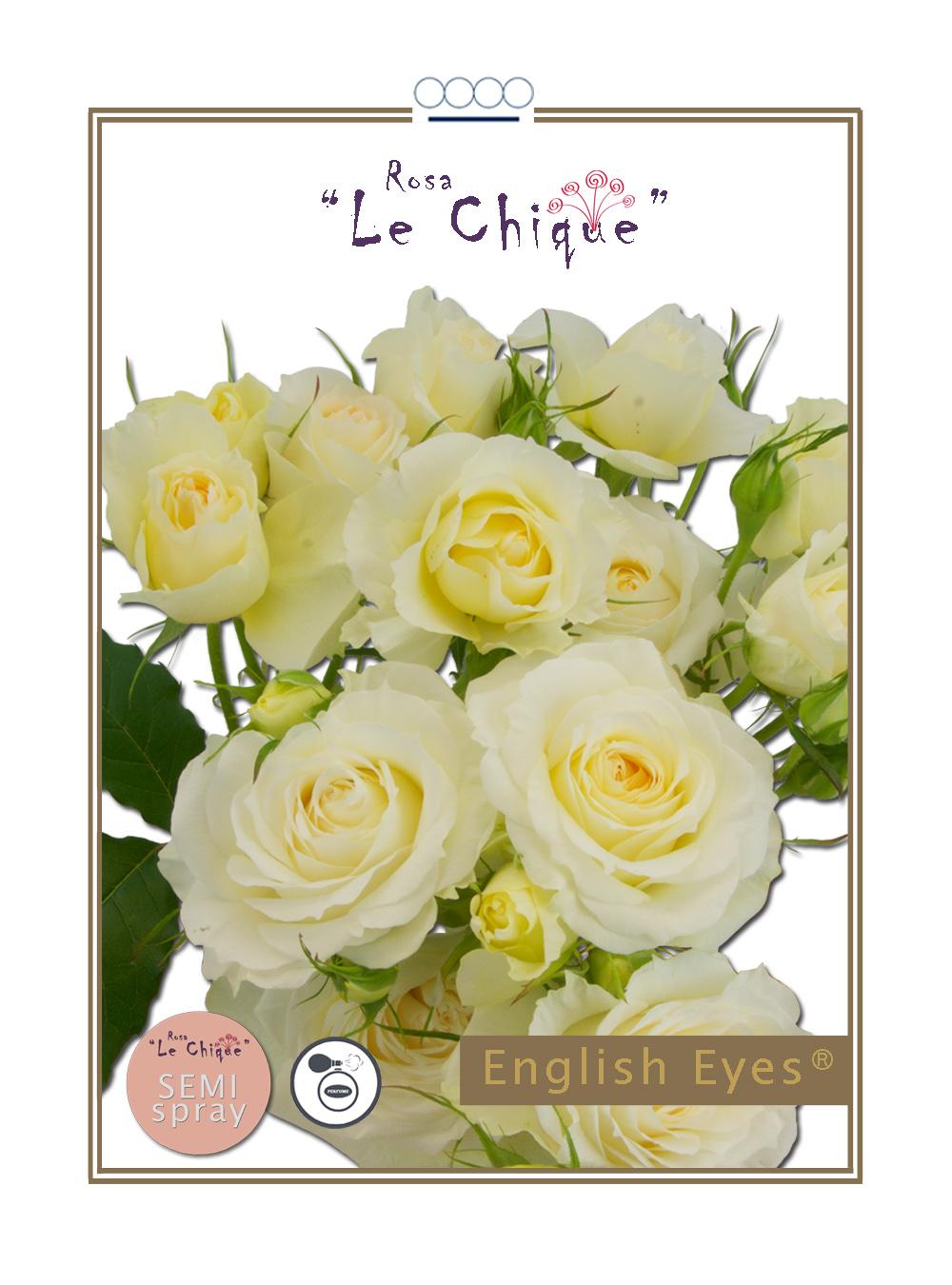 English Eyes®