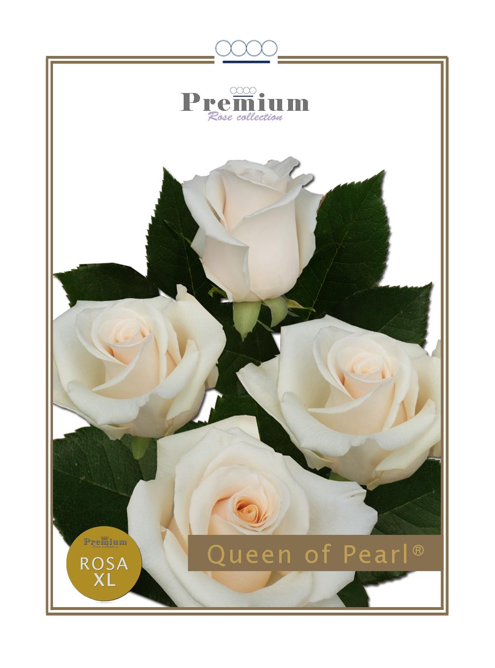 Queen of Pearl®