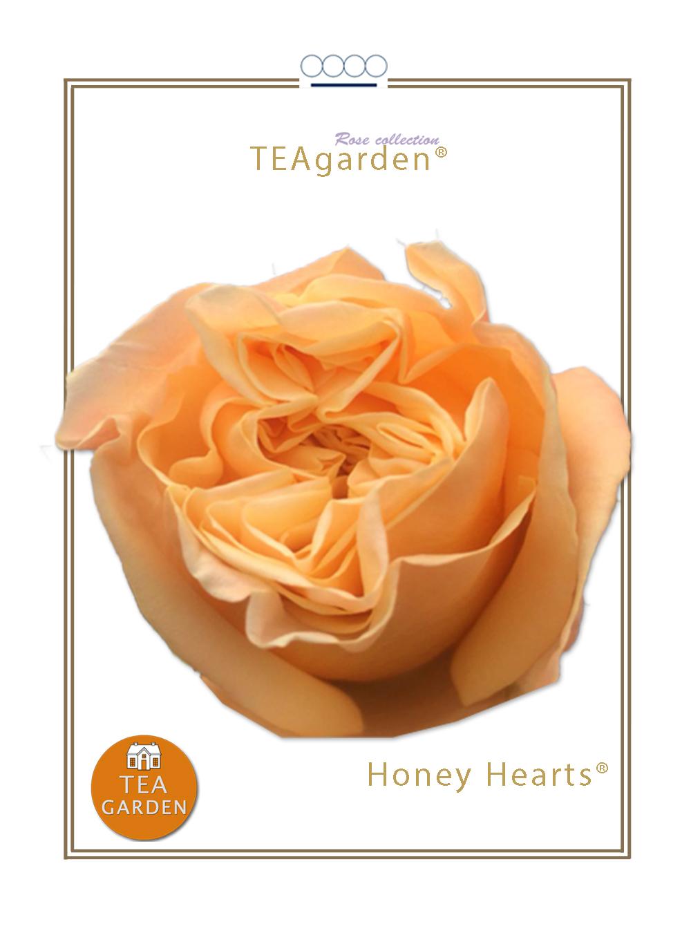 Honey Hearts®