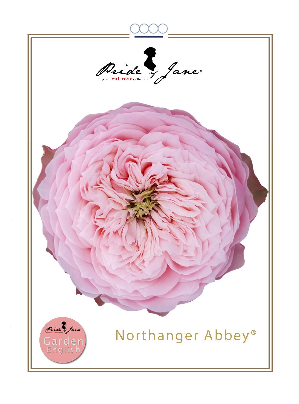 Northanger Abbey®