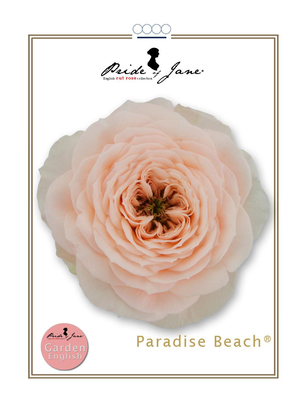 Paradise Beach®