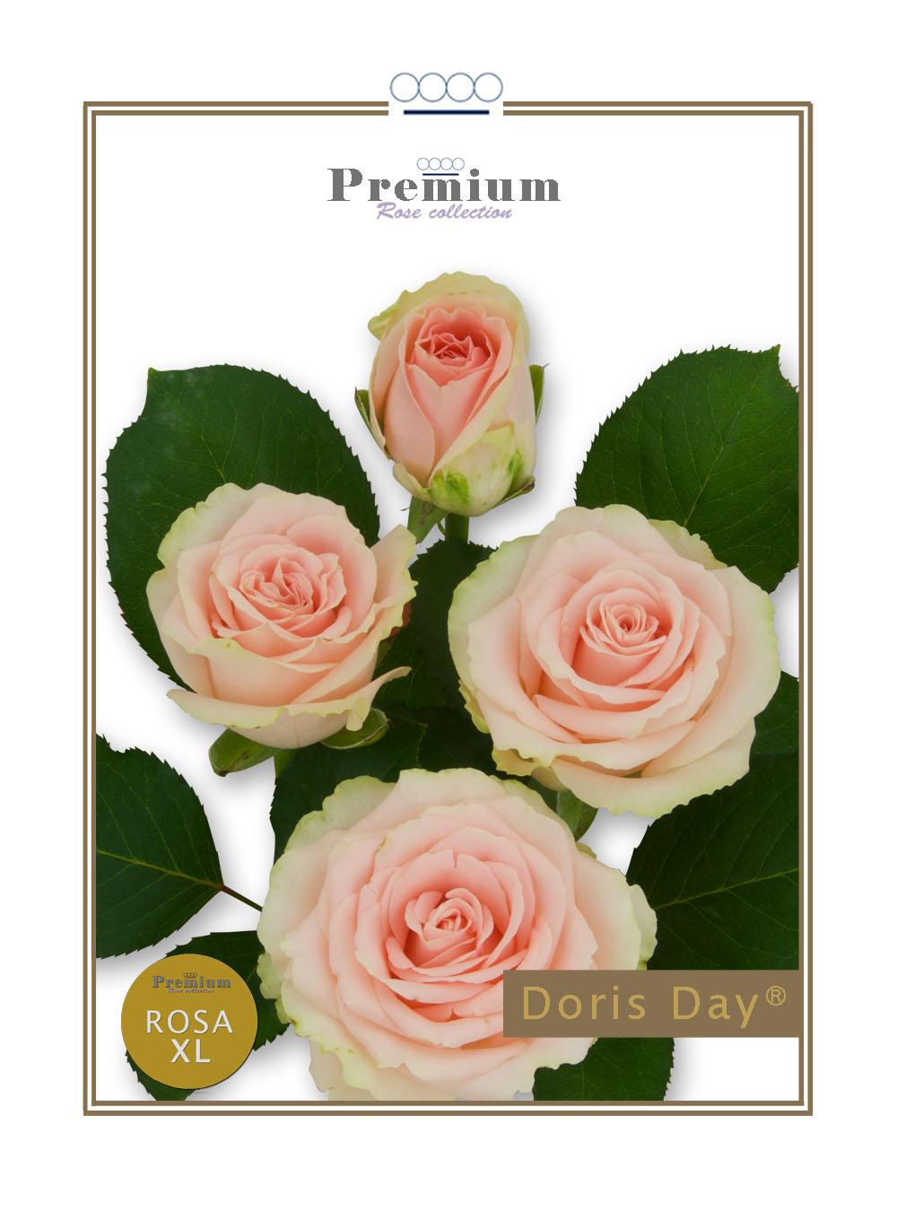 Doris Day®