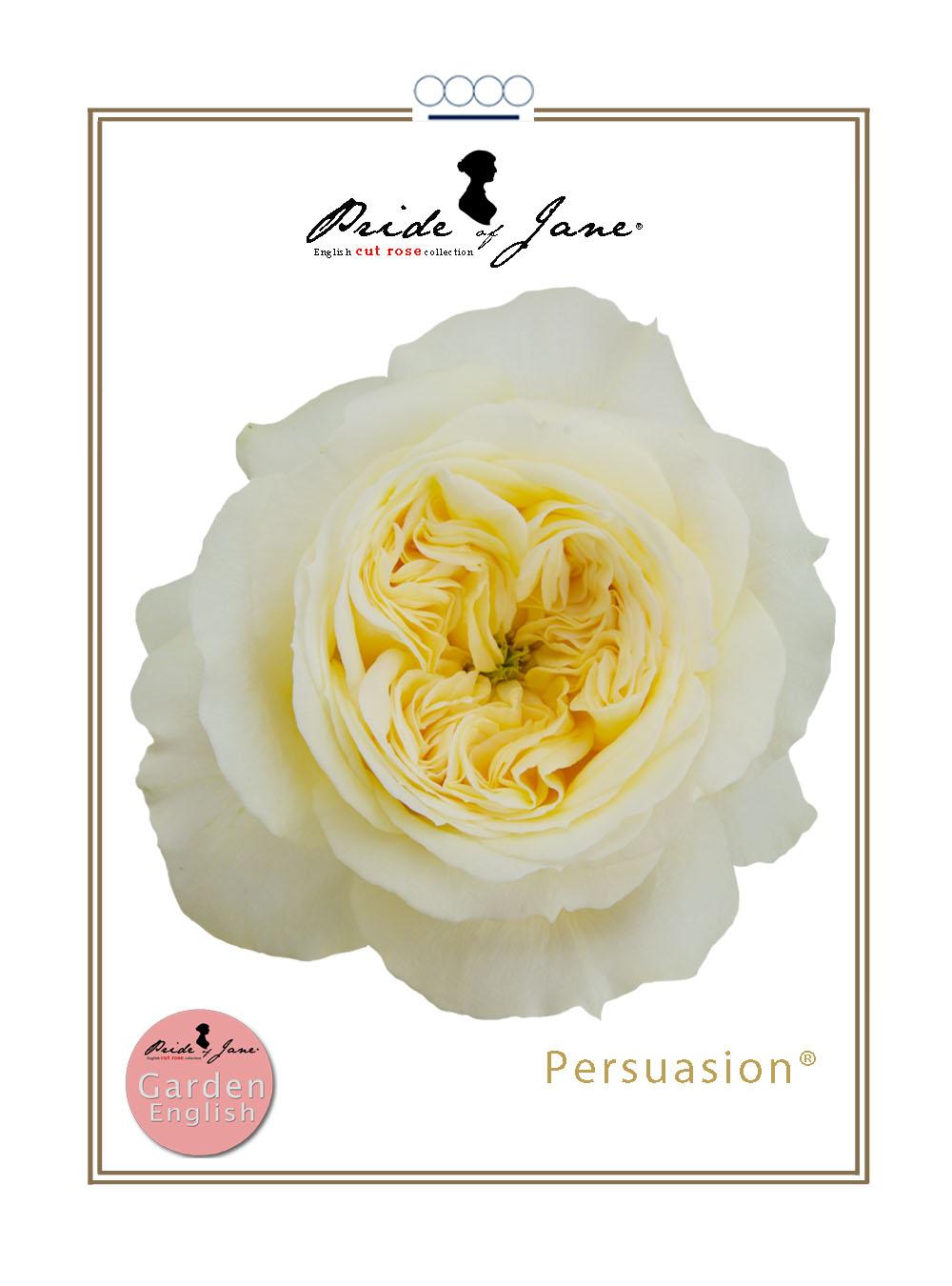 Persuasion®