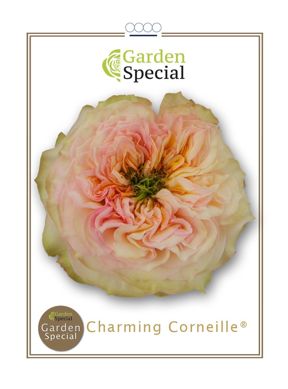 Charming Corneille®