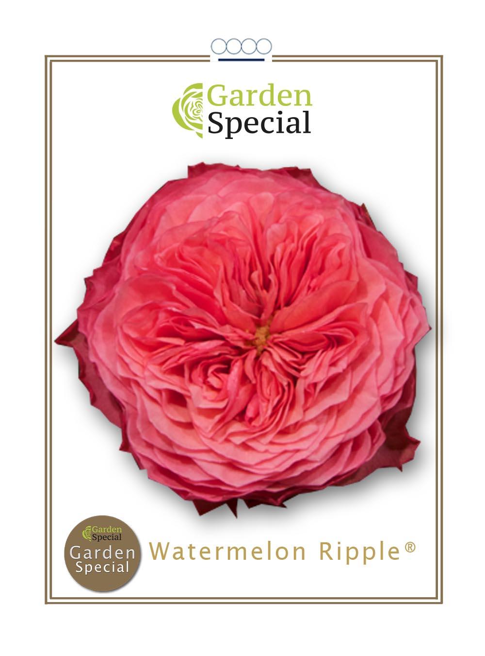 Watermelon Ripple®