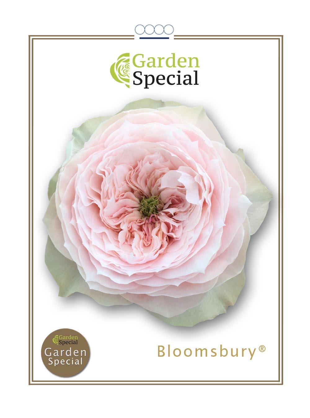 Bloomsbury®