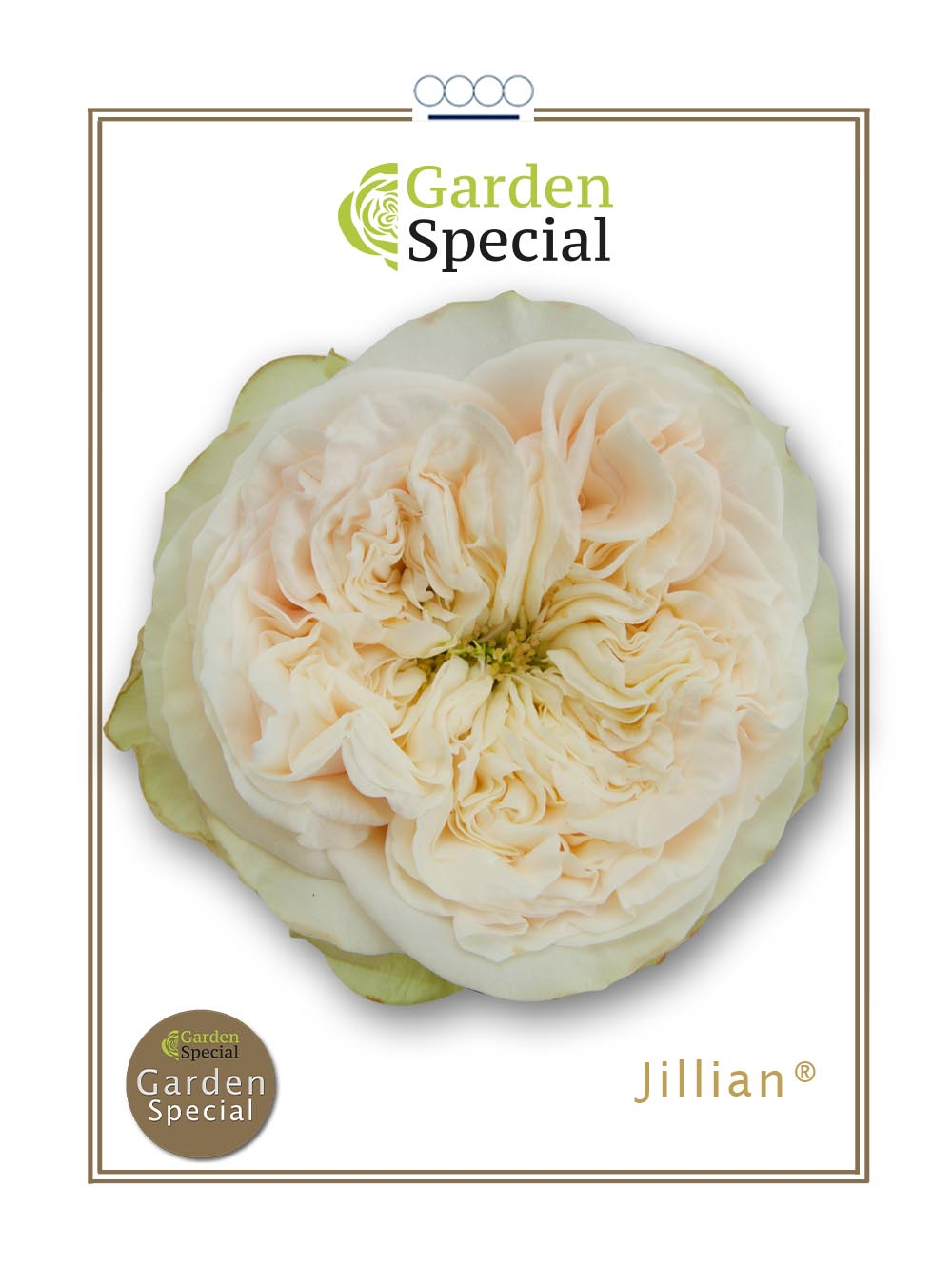 Jillian®