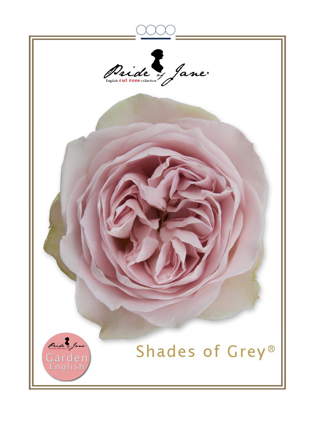 Shades of Grey®