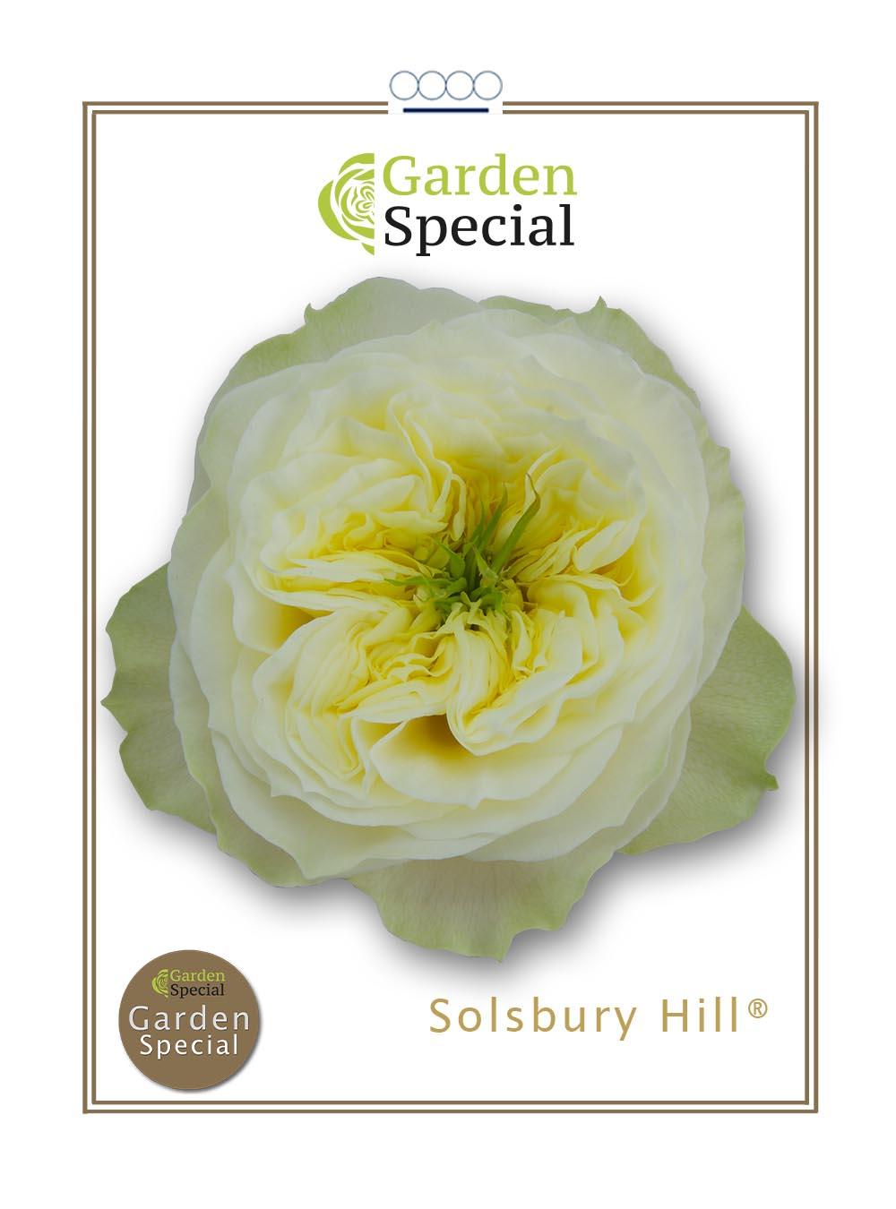 Solsbury Hill®