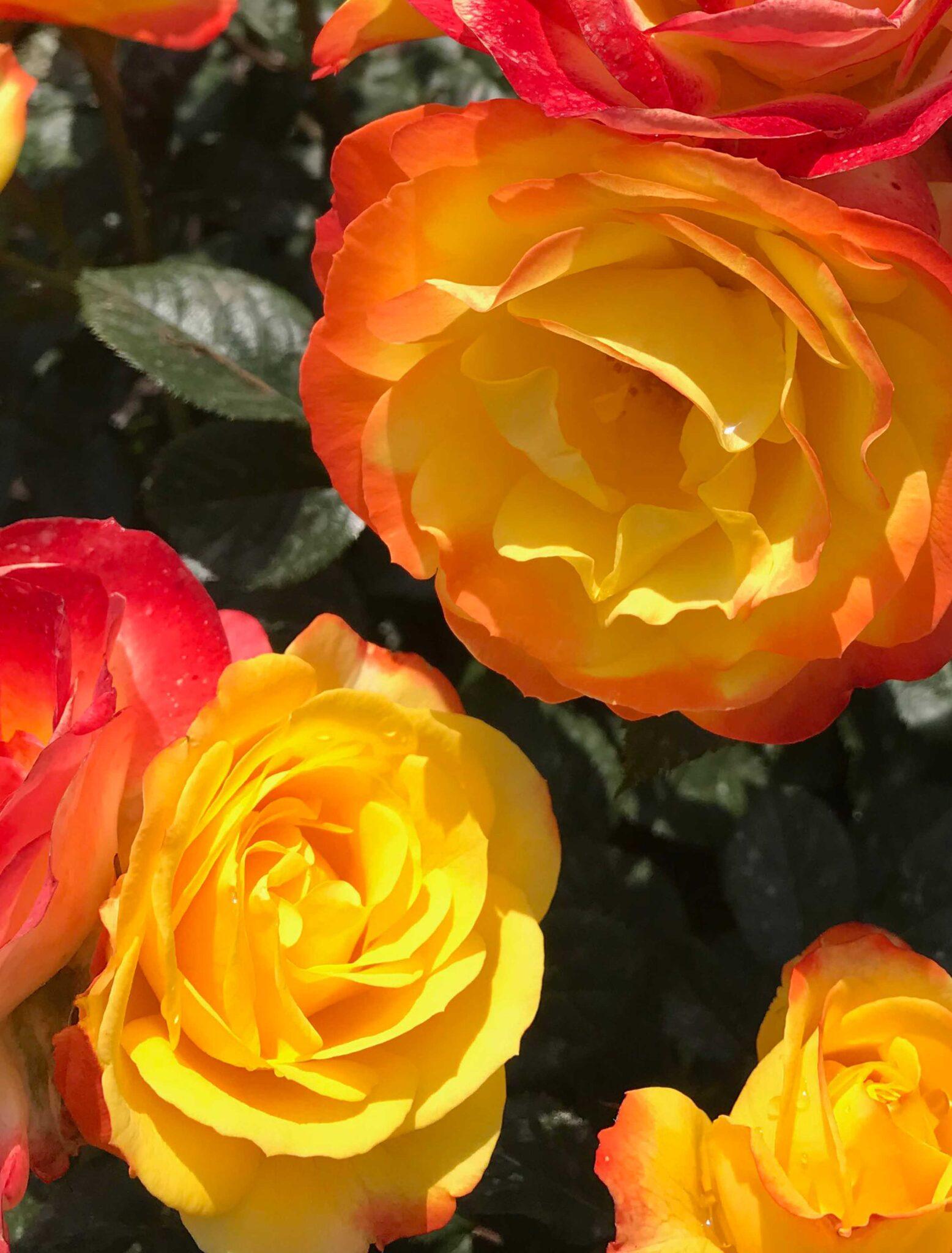 Blend Flower Village®