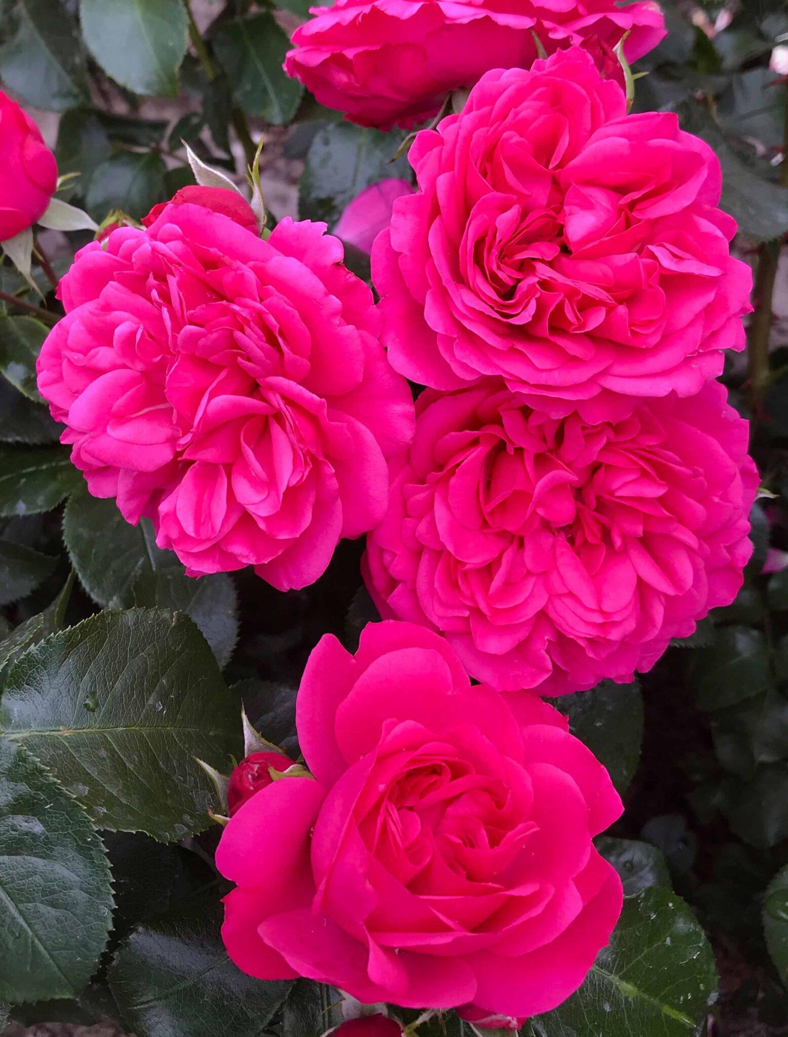 Lovely Flower Village®