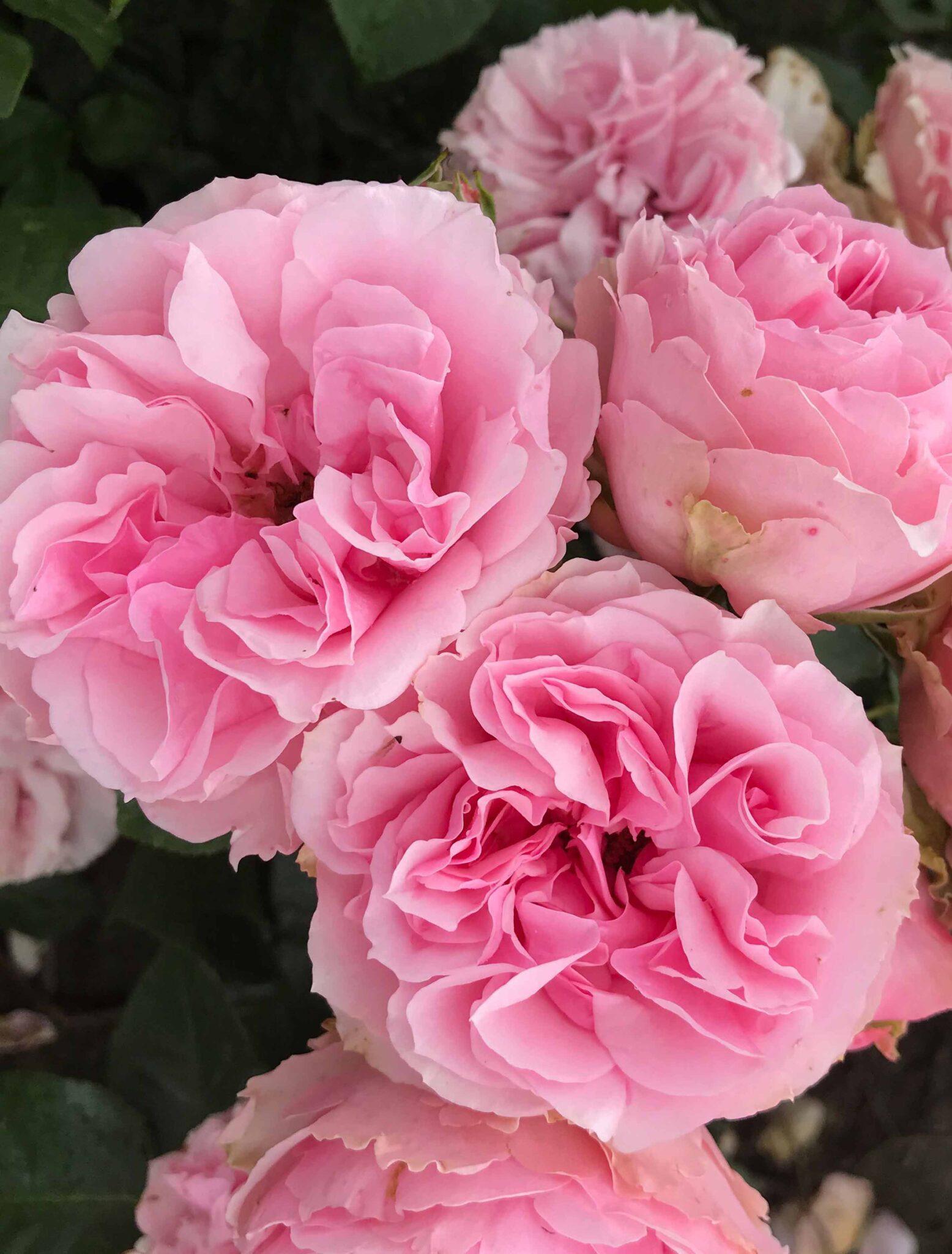 Pink Flower Village®