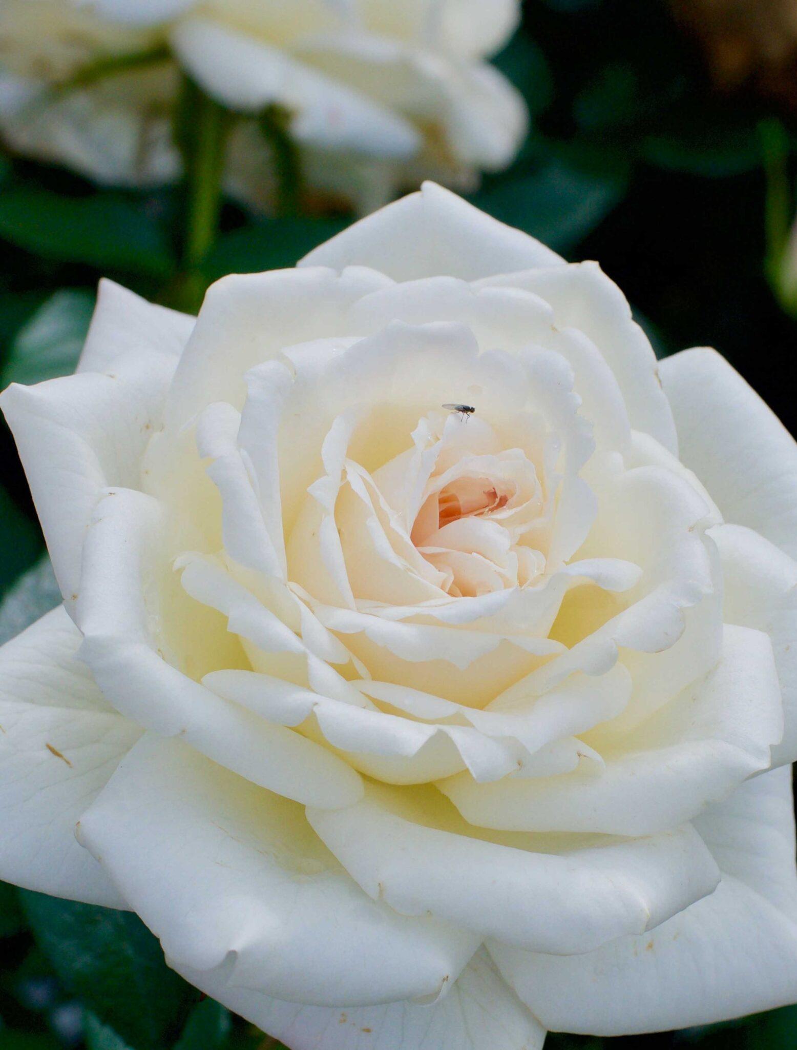 White Flower Village®