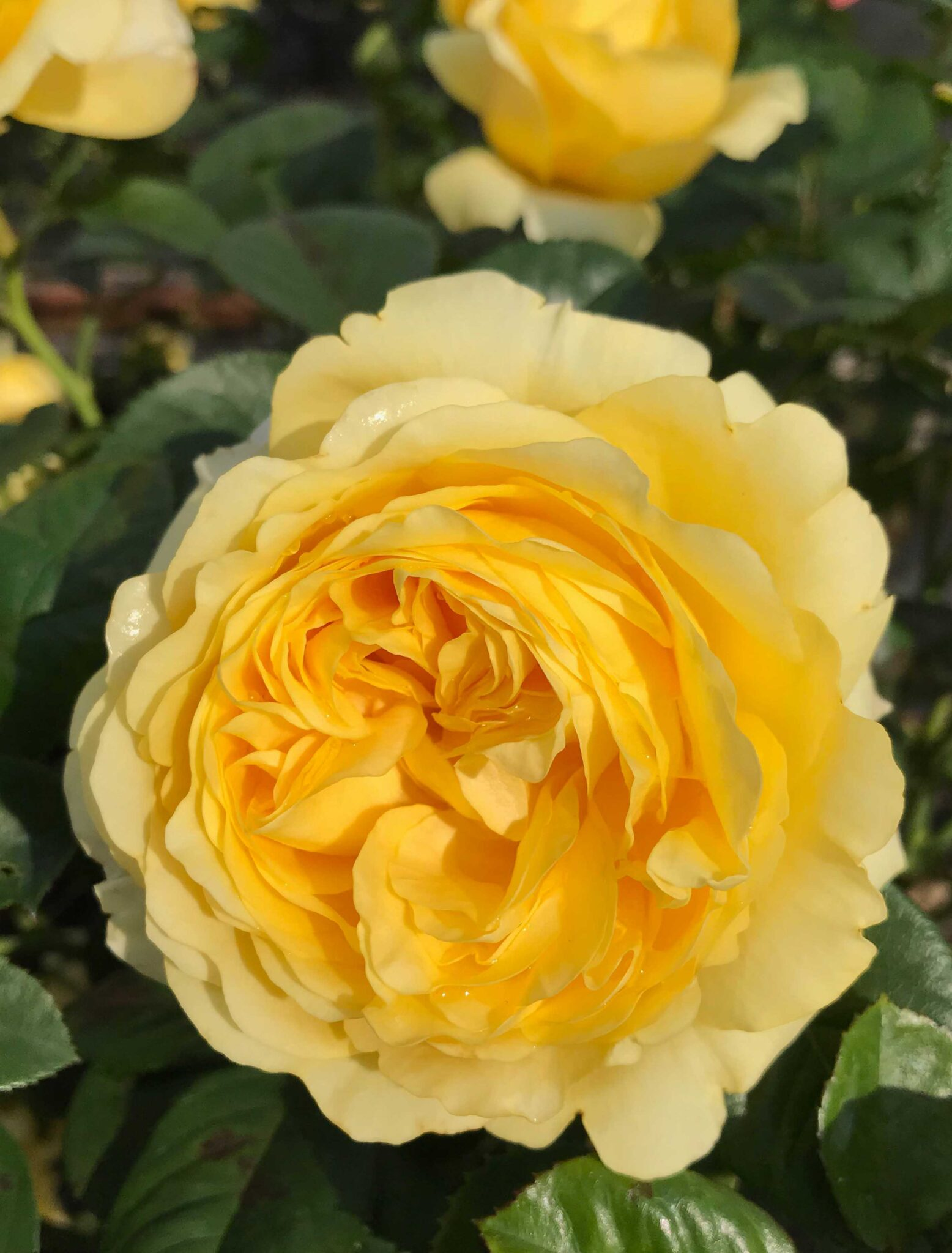 Yellow Flower Village®