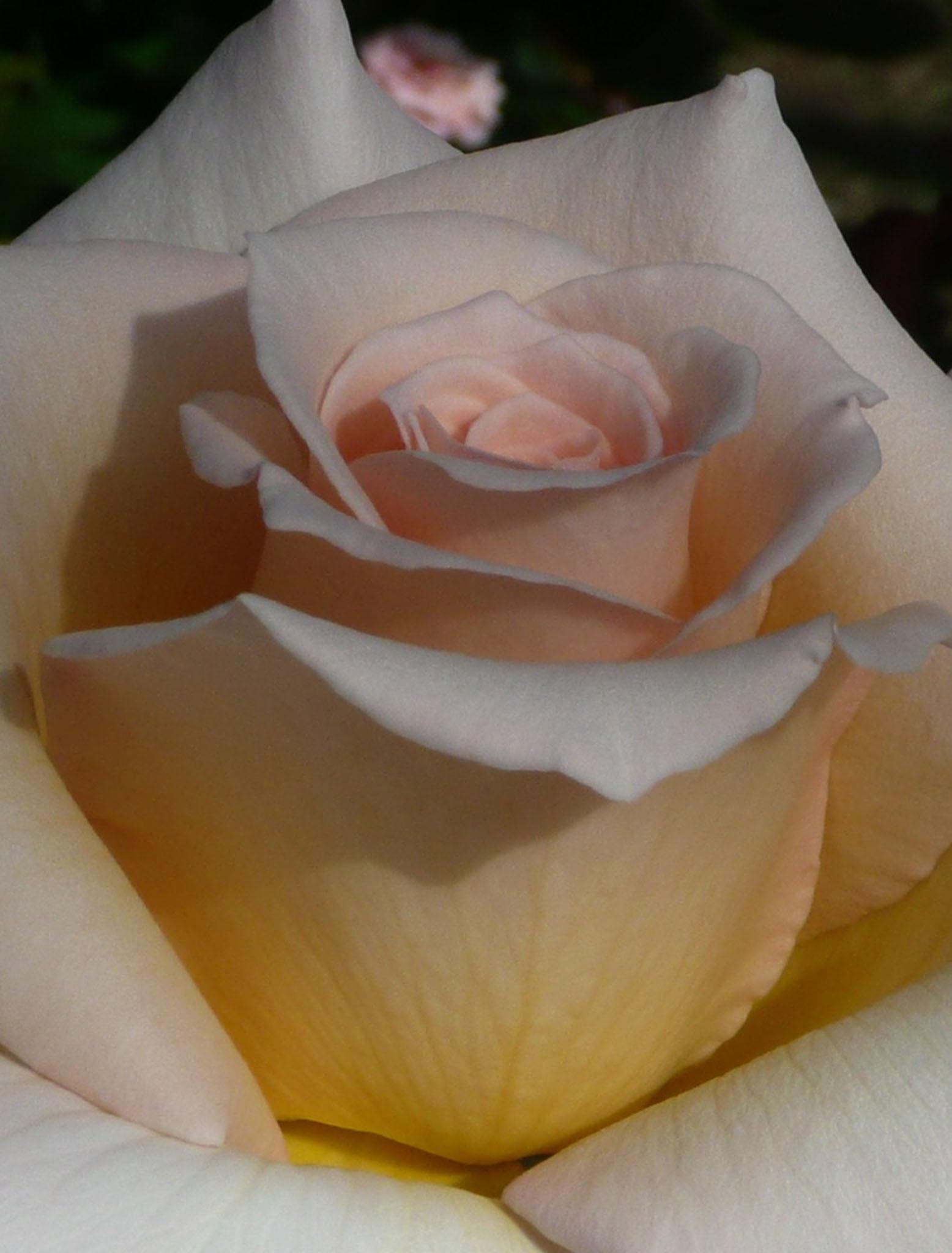Isn't she lovely®