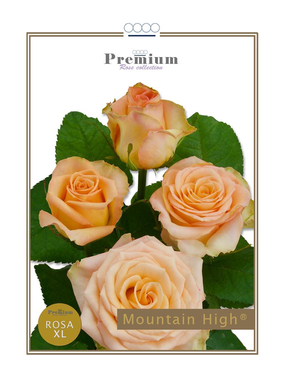 Mountain High®